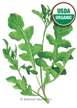 Arugula Rocket Salad Organic HEIRLOOM Seeds