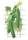 Cucumber English Telegraph Improved HEIRLOOM Seeds