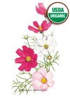 Cosmos Sensation Blend Organic HEIRLOOM Seeds