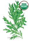 Arugula Wild Rocky Organic HEIRLOOM Seeds