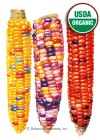 Corn Sweet Painted Hill Organic Seeds
