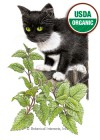 Catnip Organic HEIRLOOM Seeds