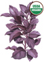 Basil Purple Petra Organic Seeds