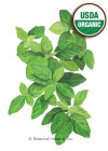Basil Lemon Organic Seeds